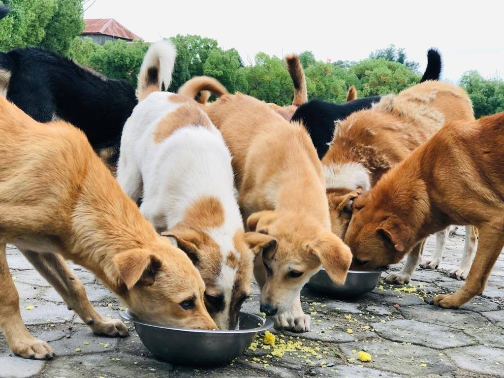 Day103:Feeding Day