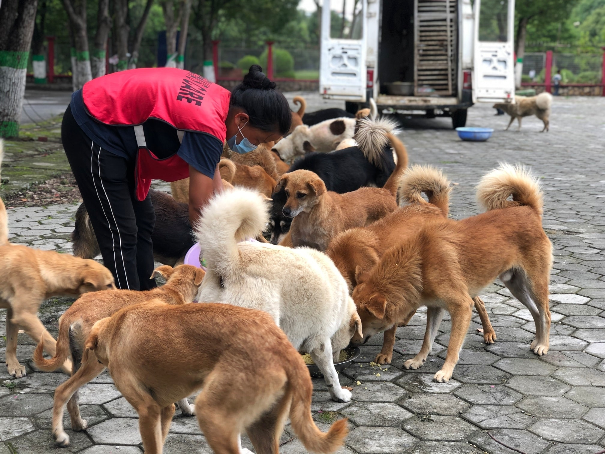 Days: Today feeding dogs