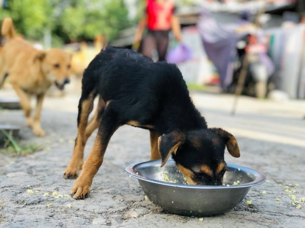 Stray Dog Population Management