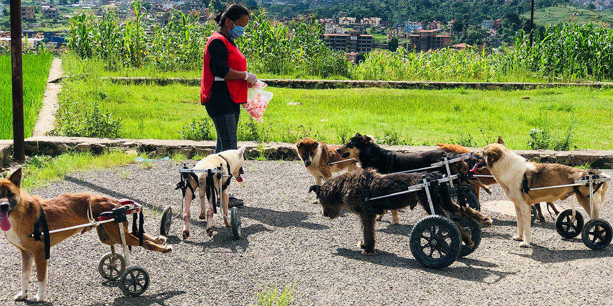 Sneha's Care Dog Shelter