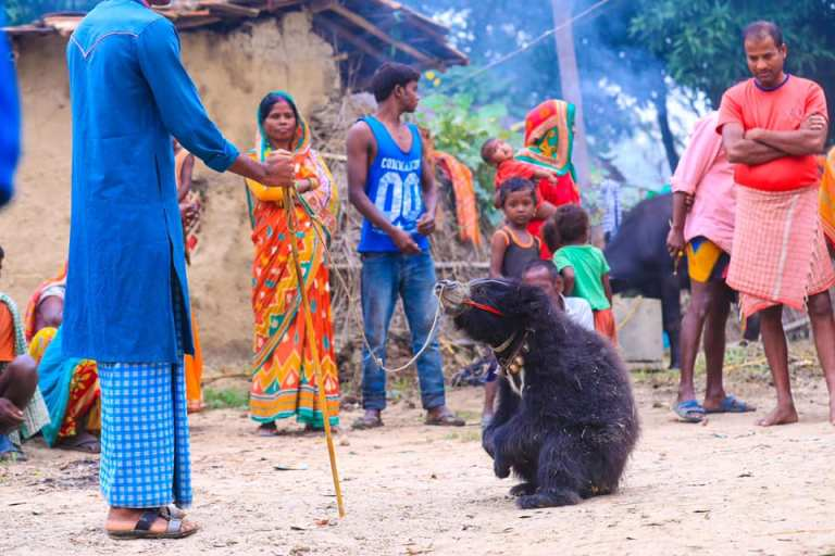 News Sneha's Care Rescues The Last Dancing Bear of Nepal