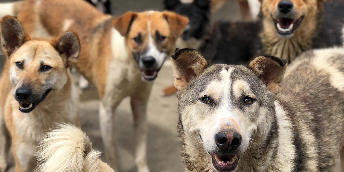 Dog Population Management