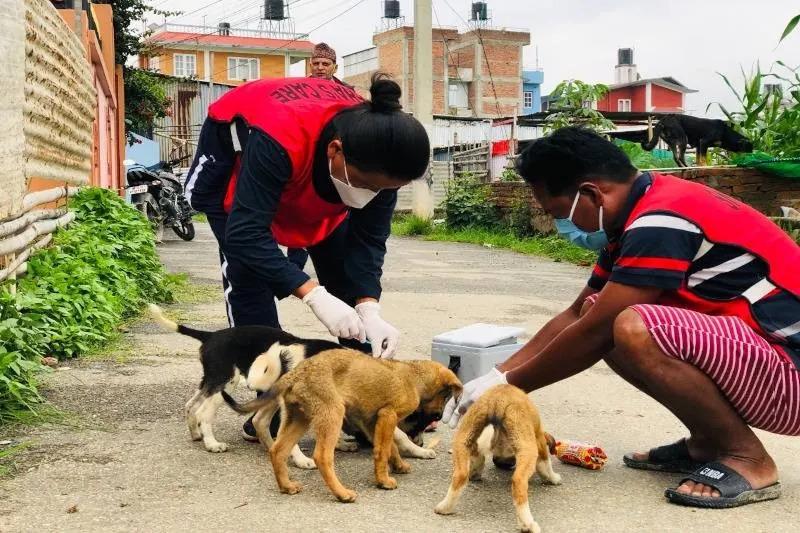 Sneha's Care providing medical care to street dogs amidst Kathmandu lockdown